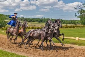Hungarian horse rider